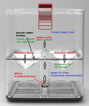 Best internal Guppy Breeding Box